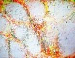 Thumbnail Marbling quatuor17 ( marbre brisé)
