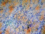 Thumbnail Marbling trio5 ( maitre-relieur)