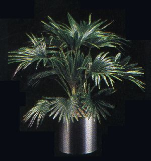 Pay for Plant Care Instruction eBook for Chinese Fan Palm / Livistona Chinensis (pdf)