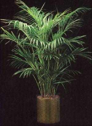Pay for Plant Care Instruction eBook for Kentia Palm / Howeia Forsteriana (pdf)