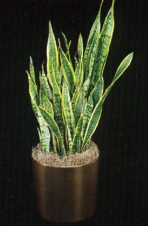Pay for Plant Care Instruction eBook for Mother-in-Laws Tounge / Snake Plant  - Sansevieria / Sansevieria Trifasciata (pdf)