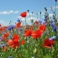 Thumbnail Phantasiereise 02: Die Blumenwiese der Kraft