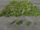 Thumbnail 3 Stem Grass clump x 4