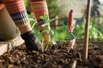 Thumbnail Gardening, 25 guides!