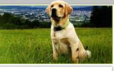 Thumbnail Dog Breeding (PLR)