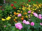 Thumbnail Gardening Handbook with resell rights