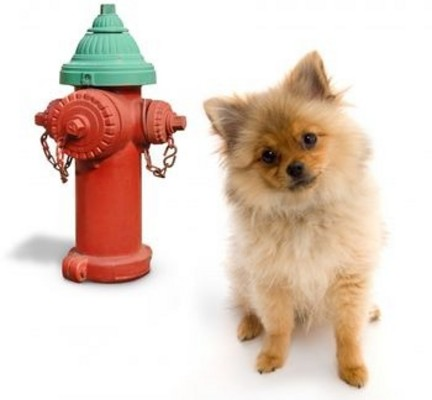 Pay for Dog Potty Training - Potty Train Your Dog In No Time!