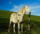 Thumbnail Tolstoi: Historia de un caballo