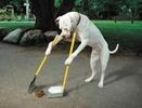 Thumbnail Dog Training Techniques (PLR)