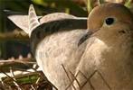 Thumbnail Birdwatching for Beginners ebook