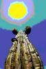 Thumbnail Arizona Cactus abstract 5
