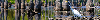 Thumbnail Egret in Louisiana swamp, web banner photo