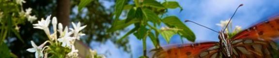 Thumbnail Butterfly flies through a garden, web banner photo