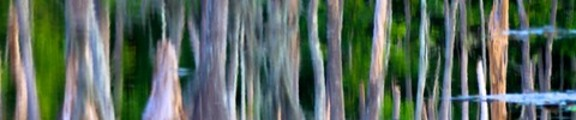 Thumbnail Cypress knee reflections in swamp, web banner photo