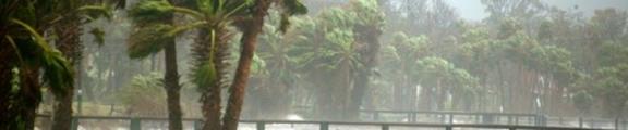 Thumbnail Rain and Trees, Hurricane Jeanne, web banner photo