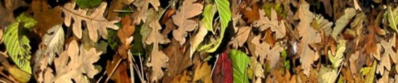 Thumbnail Colorful Fall Leaves, web banner photo