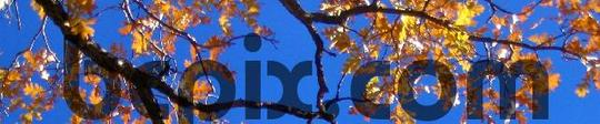 Pay for Yellow fall leaves on branches, web banner photo