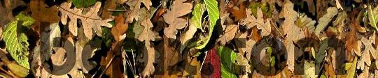Pay for Colorful Fall Leaves, web banner photo