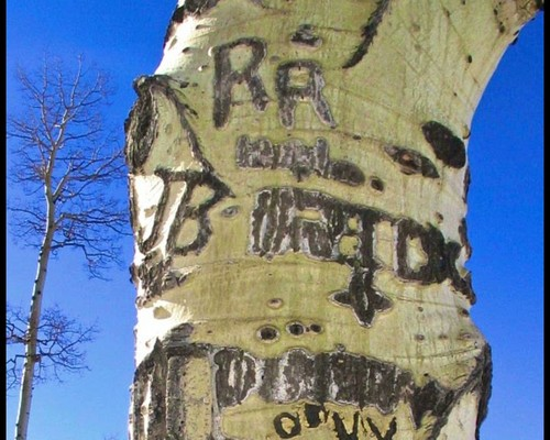 Pay for Letters carved in the Bark of a Birch Tree