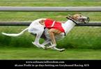 Thumbnail Amazing Greyhound Winners $6000 in 90 days