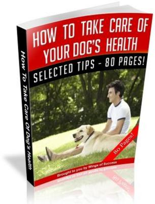 how to take care of a dog& 39