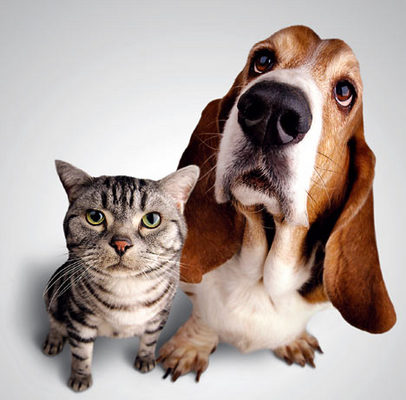Pay for Pets Rating Site (PHP Code)