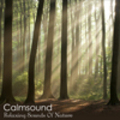 Thumbnail Relaxing Sounds of Nature - The Pure Meditation Album