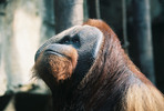 Thumbnail Linda S. Milks / AnimalStockPictures.com