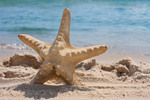 Thumbnail Starfish on the beach