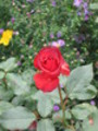 Thumbnail Blüte
