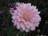 Thumbnail Blüte 4