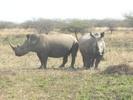 Thumbnail Rhino Image Of Two Beautiful Rhinos