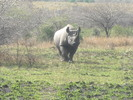 Thumbnail Rhino Image Of Beautiful Rhino In South Africa