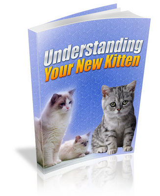 Pay for Understanding Your New Kitten
