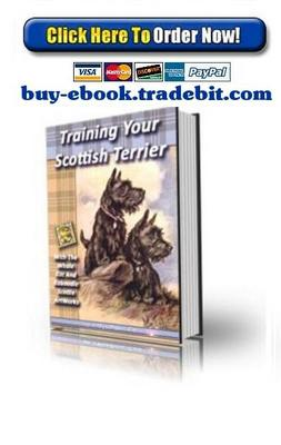 Pay for Training Your Scottish Terrier
