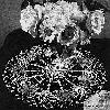Thumbnail Blue Aster Doily Vintage Crochet Pattern