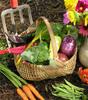 Thumbnail Veg Gardening Secrets - How to Grow Vegetables
