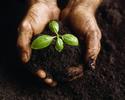 Thumbnail DIY African-American Theme Gardening Plan at Home