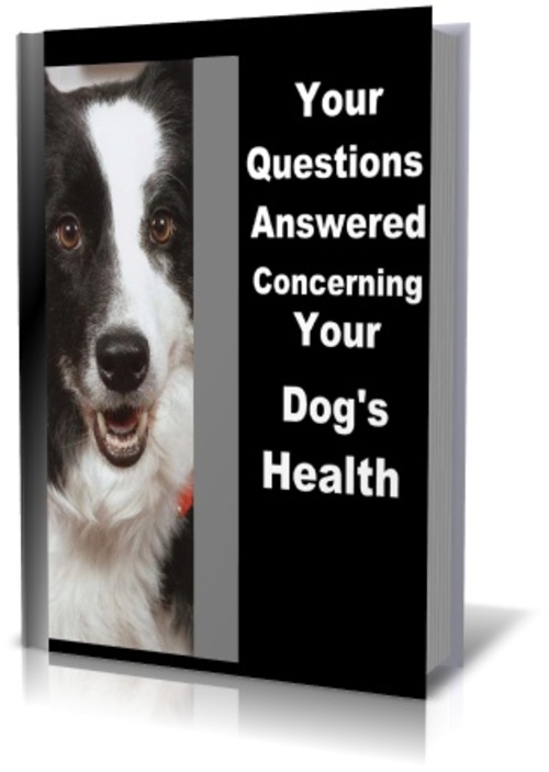 Pay for ALL Your Questions Answered Concerning Your Dog Health