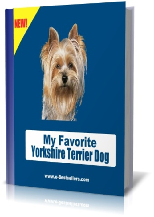 Pay for My Favorite Yorkshire Terrier Dog