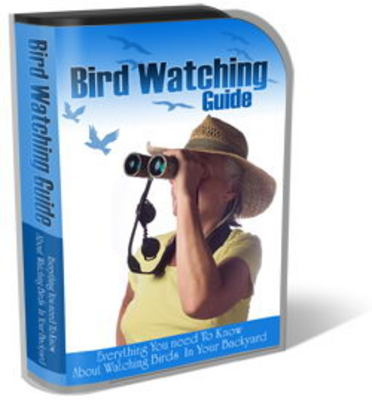 Pay for Bird Watching Site Template Pack