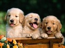 Thumbnail 795 Dog Niche Articles - Instant Download