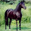 Thumbnail Black Beauty: The Autobiography of a Horse by Anna Sewell