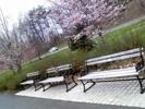 Thumbnail Park Benches