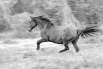 Thumbnail Horse
