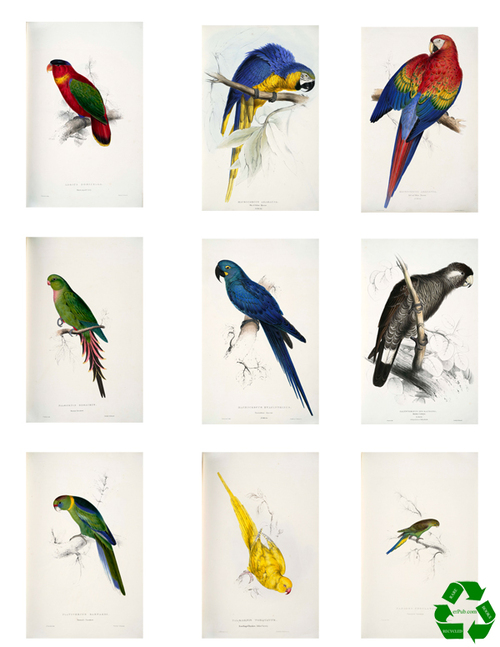 Pay for 38 PARAKEETS and MACCAWS Images With Resell Rights