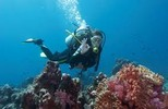 Thumbnail 150 Diving Articles - High Quality Articles - PLR