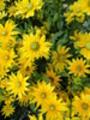 Thumbnail Garden flowers
