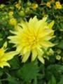 Thumbnail Summer flowers