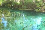 Thumbnail Manatee Springs, FL.